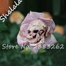 Recommend Seeds The Death Rose Seeds Rare and Mysterious Plant Species of Snapdragon Flower Seed Pods Skull 100PCS