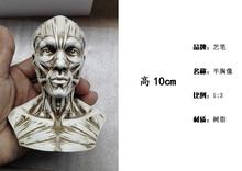 human skeleton sale online shopping-the world largest human, Skeleton