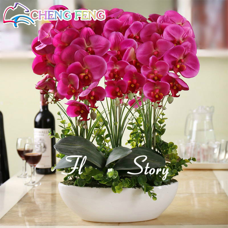 Hot Sale 50pcs Phalaenopsis Seeds For Living Room And Garden Decoration * Indoor  Plants Flowers Perennial