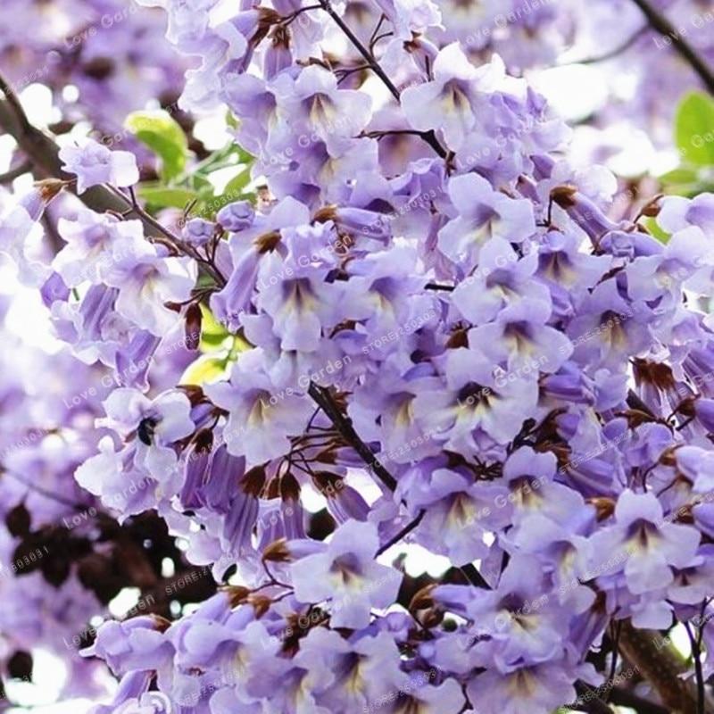 странице адамово дерево фото комнатное растение дождик