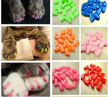 Colorful Cats Kitten Paw