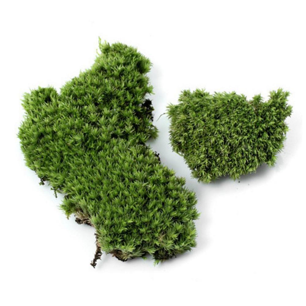 Натуральный дикий коврик со мхом живой сохраненный сушеный мхи дерн для микро ландшафтного дизайна Террариум горшок для садового растения ...