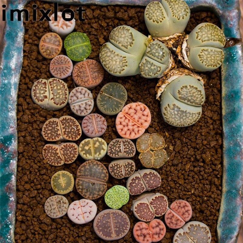 Imixlot 100Pcs/Pack Lithops Seeds Rare Mixed Living Stones Succulent Plants Landscape Flower Garden Home Office Decoration