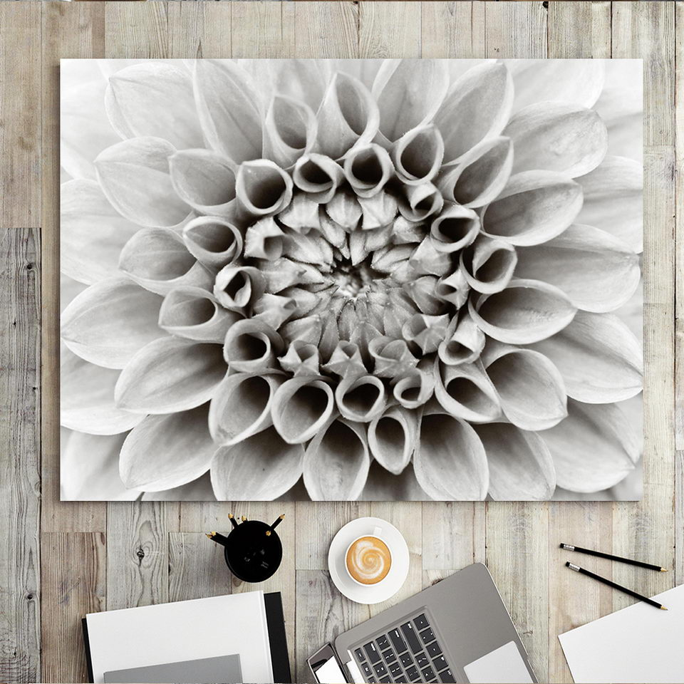 Chrysanthemum Black /& Whit Flower Canvas Wall Art Picture Print