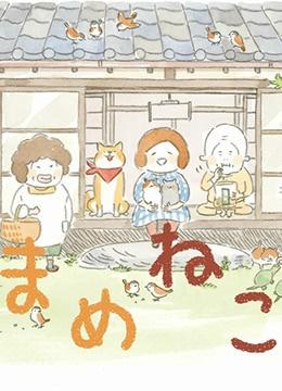 《豆豆猫》2018年日本动画动漫在线观看