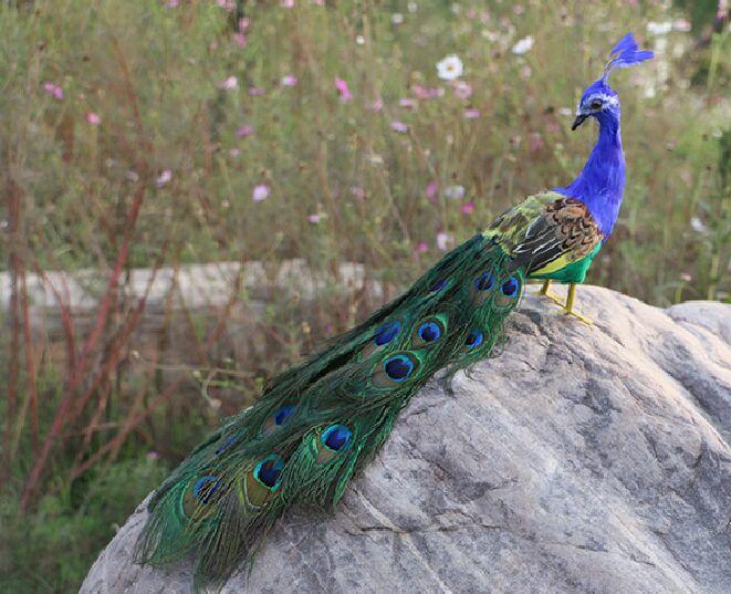 Vraie vie jouet oiseau 45 cm belles plumes paon modèle tourner la tête en arrière, artisanat maison jardin décoration partie accessoires jouet h0577