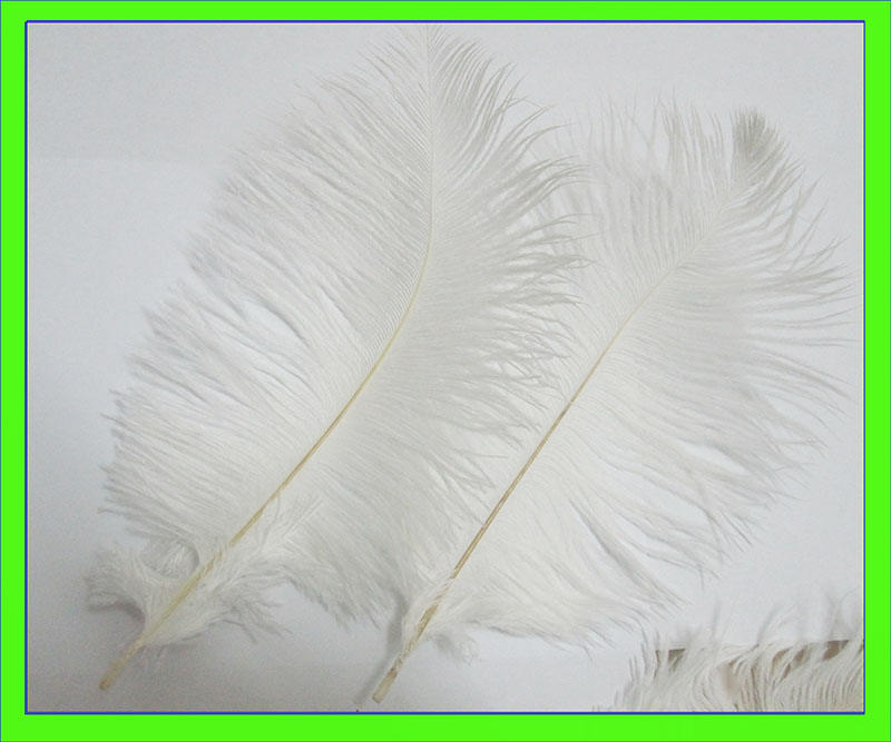 Free shipping 100pcs/lot 15-20cm/6-8inch white ostrich feathers plumage flapper dresses for craft bulk sale feathers