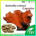 500 mg * 100 unids/Bag Previene el cáncer de la medicina china de setas camphorata Antrodia extracto en polvo