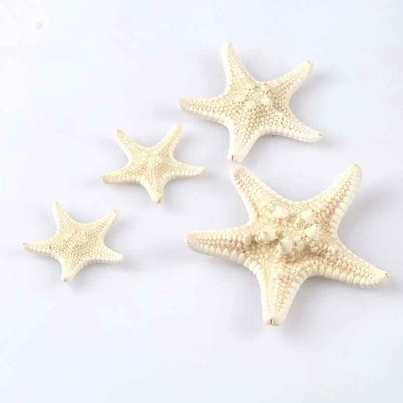 5pcs 2-4cm Natural Beige Starfish Nautical Sea Shells For Wedding Decoration Scrapbooking Seastar Crafts Home Beach