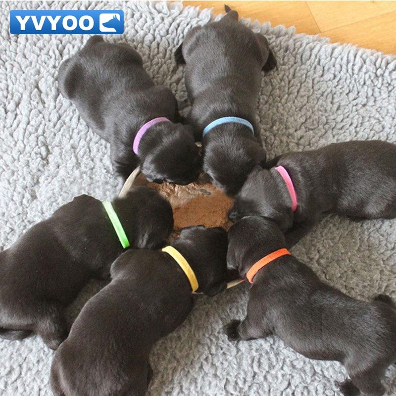 YVYOO Puppy ID Identifikacija Ovratnice Prilagodljiv Najlon Majhne Pet Dog Ovratnice Kitten Ogrlica Whelping Puppy Ovratnice 12PCS B25
