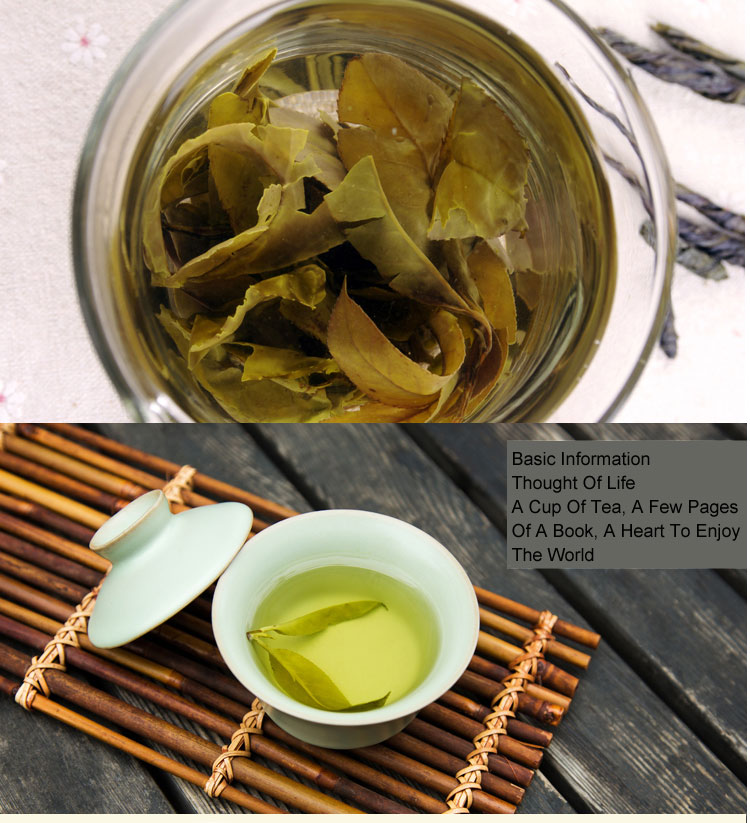 100G Organic Kuding Ku Ding Cha Natural Health Clearing Heat Lose Weight Ilex Kudingcha Skin Care DIY Raw Materials Dry Tea