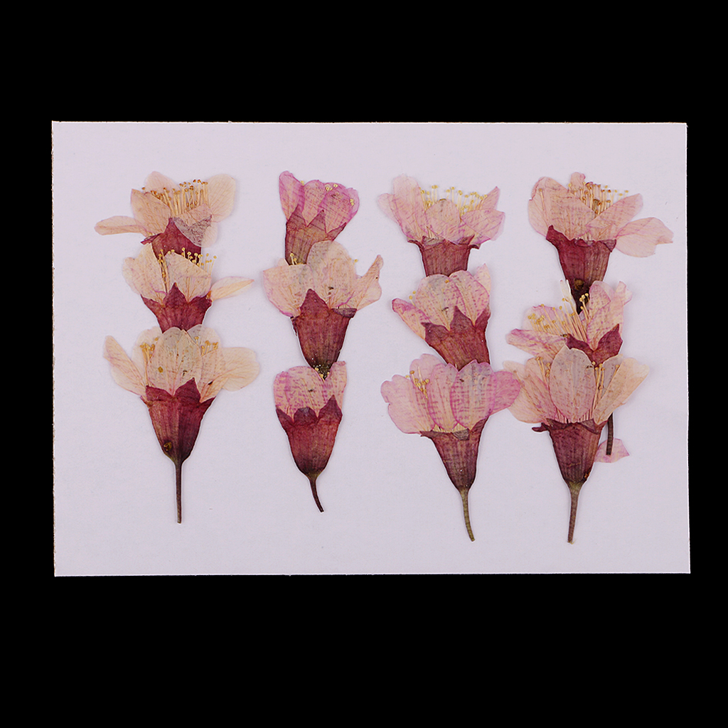 MagiDeal 12x Pressed Real Sakura Flower Dried Flowers DIY Phone Case Scrapbook Crafts for Making Greeting Card Craft Accessories