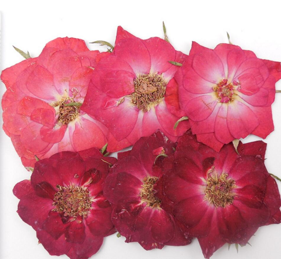 100pcs Pressed Press Dried Rose Flower Filler For Epoxy Resin