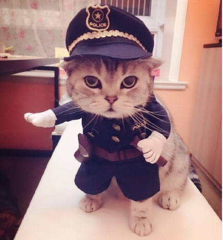 New-2016-whimsy-Free-shipping-so-funny-Pet-cat-dog-Dress-uniform-suit-clothes-hat-become.jpg_640x640