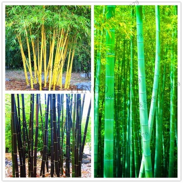 Acheter 20 pcs color bambou graines for Achat de plantes sur internet