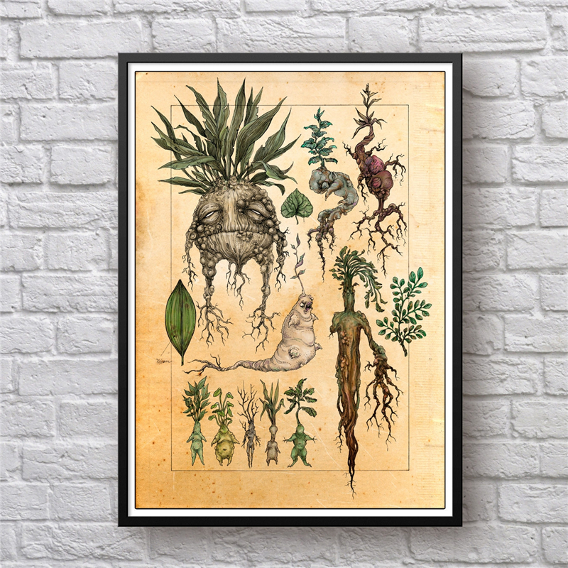 Harry Fan Art Illustration Mandrake Decor Canvas Painting Wall