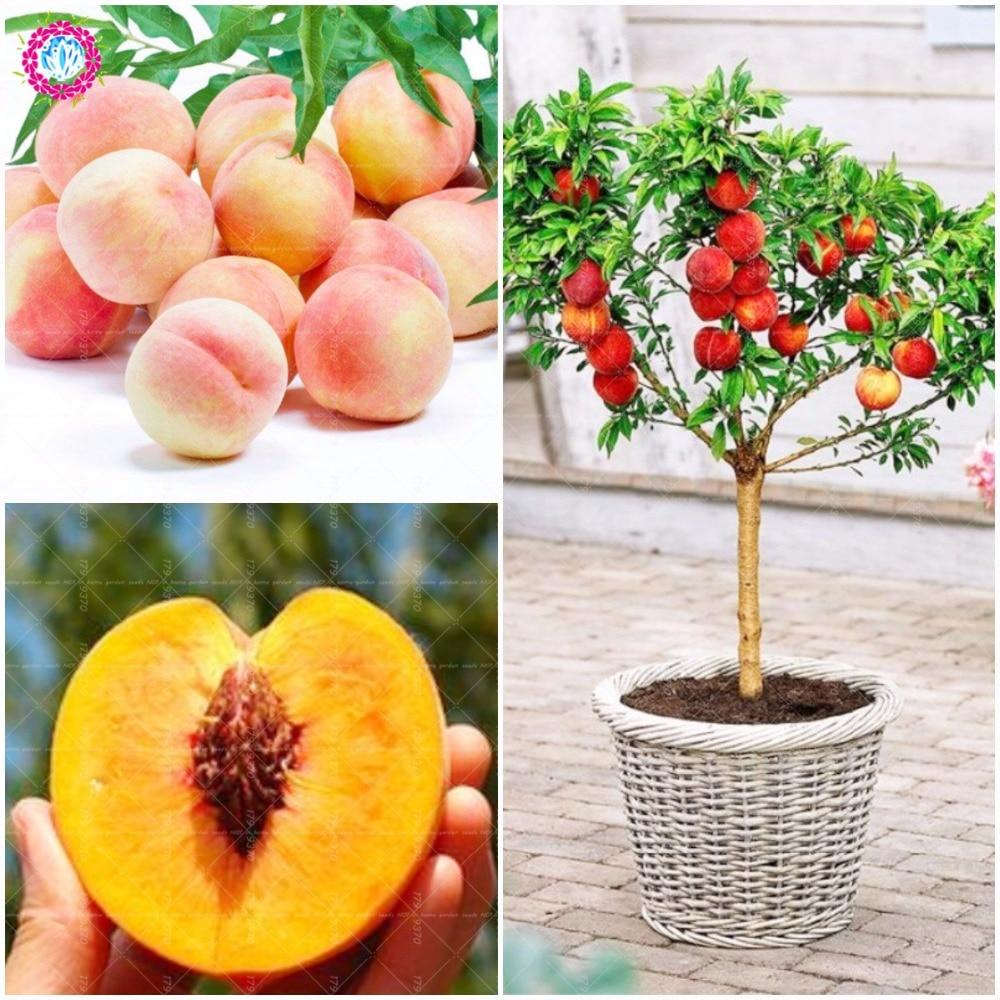2018 Peach  Bonsai tree  Eat delicious juicy meaty fruit  Diy Couryard for home garden pot plants Semillas 2pcs