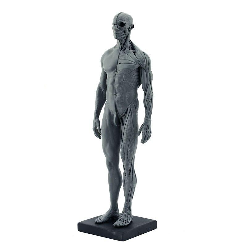 Resina completa hombres humano Cuerpo modelo Médicos anatomía modelo ...