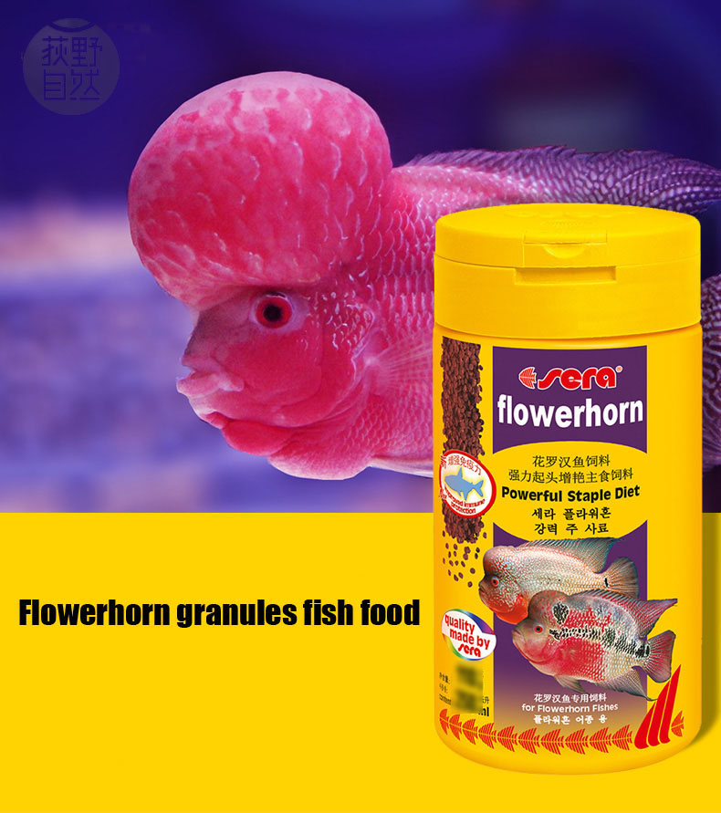 Buy fish food aquarium flowerhorn for Flower horn fish price