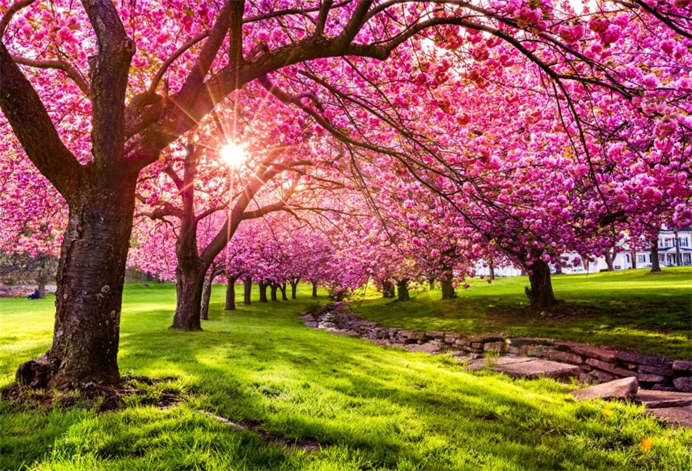 Laeacco Spring Tree Pink Blossom Flower Grassland Sunshine Natural Scenic Photo Backgrounds Photographic Backdrops Studio