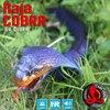 Remote Control Cobra Snake Kidss Battery Operation USB Charging Toys Simulation