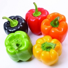 Marseed Various Types of Mixed Sweet Pepper Plants Organic Non-GMO Heirloom Food as an addition to Salads as a Healthy Snack