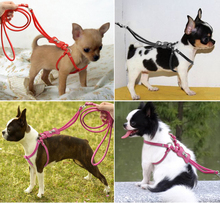 Buddy Belt PU Leather Chihuahua Harness