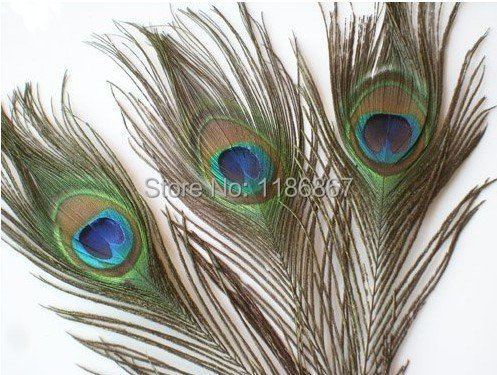 Free Shipping 200pcs Lot Beautiful Natural Peacock Tail