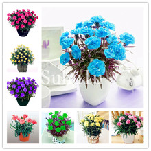 New Arrival! Rare Mini Carnations Bonsai Flowers Dianthus Caryophyllus For Home Garden Plant Mom Gift 100 Pcs