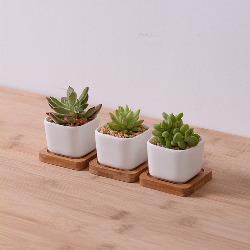 3pcs Lot Hot Sale Mini Ceramic Flower Planter Pot With