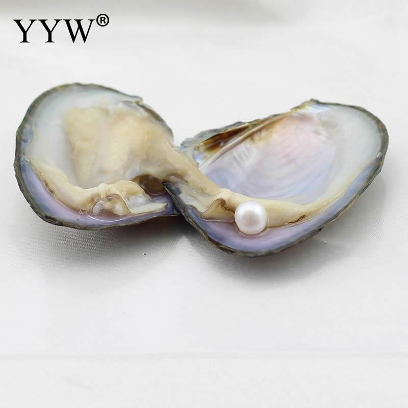 Mysterious Surprise Gift Freshwater Vacuum-pack Oyster Wish Pearls 7-8mm Mussel Shell with Pearl Inside