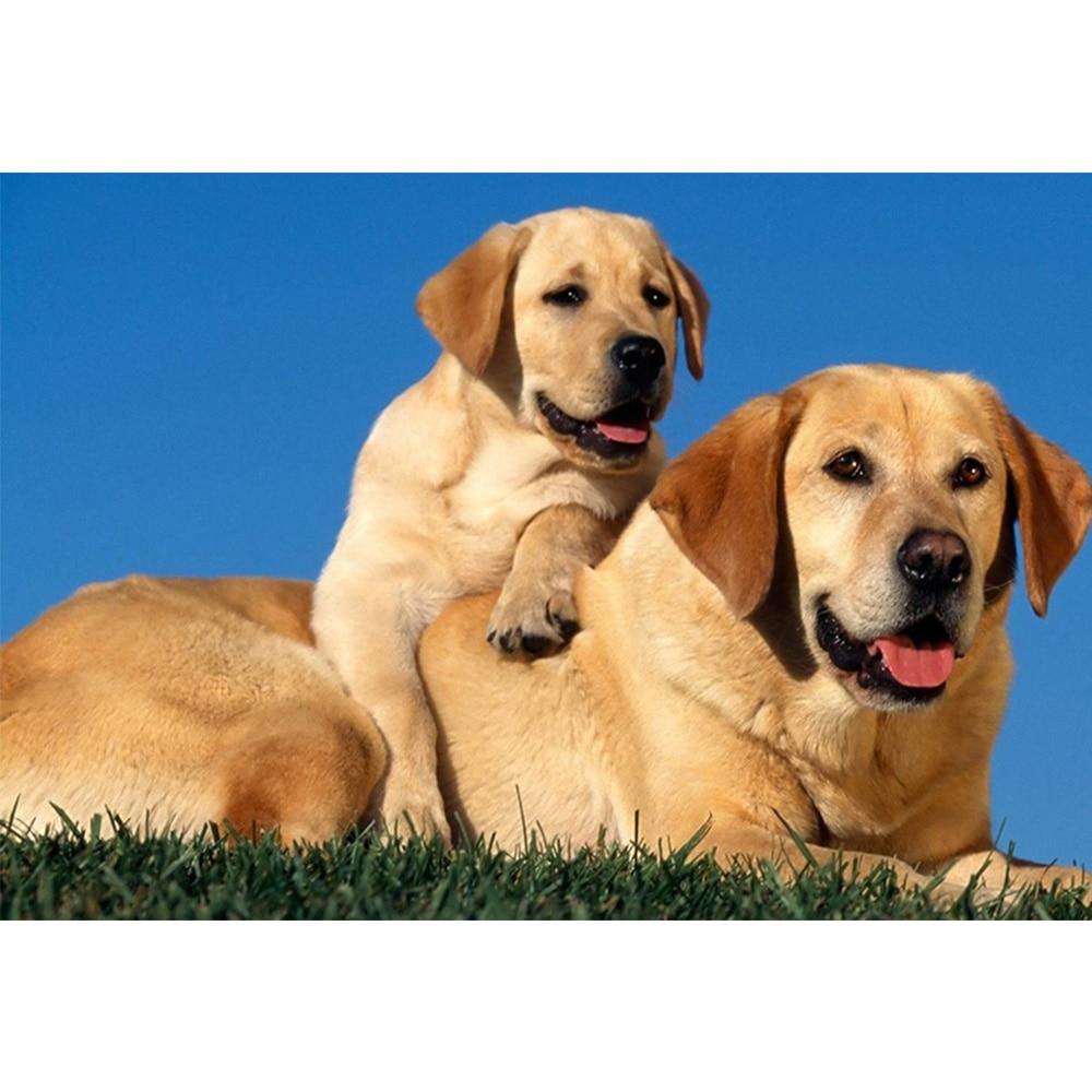 107 Gambar Hewan Anjing Lucu Gratis Gambar Hewan