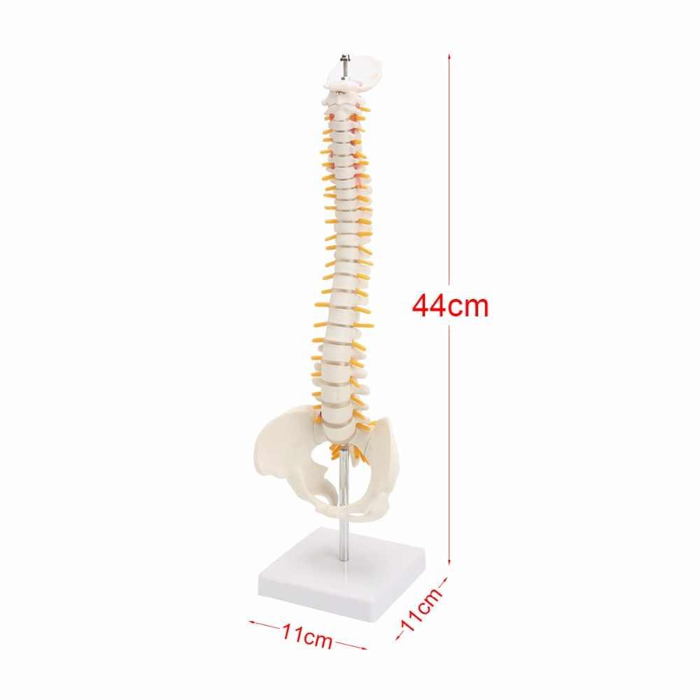 45 cm Colonna Vertebrale Umana con il Pelvico Modello Anatomico Umano Anatomia Della Colonna Vertebrale Modello Medico della colonna vertebrale colonna modello + Del Basamento Fexible