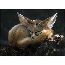Promo DIY diamond painting embroidery the sleeping fox Needlework cross stitch pasted Full halloween christmas New Year gift A6353R