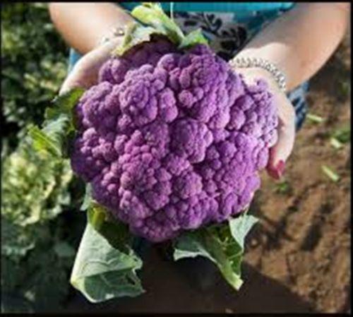 20 Seeds Purple Cauliflower Amethyst F1 Hybrid aka Graf