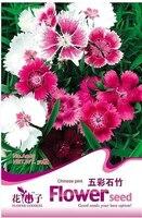 Hot selling 50pcs Mixed   Seeds Dianthus Caryophyllus bonsai seeds DIY home garden free shipping