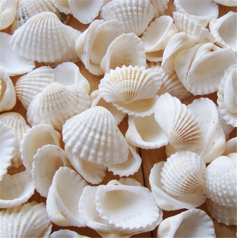 100pcs/Lot Natural Shell Diy Tank Aquarium Decoration White Shell 2-3cm Small Conch Sea Natural Crafts White Sea Shells Conch