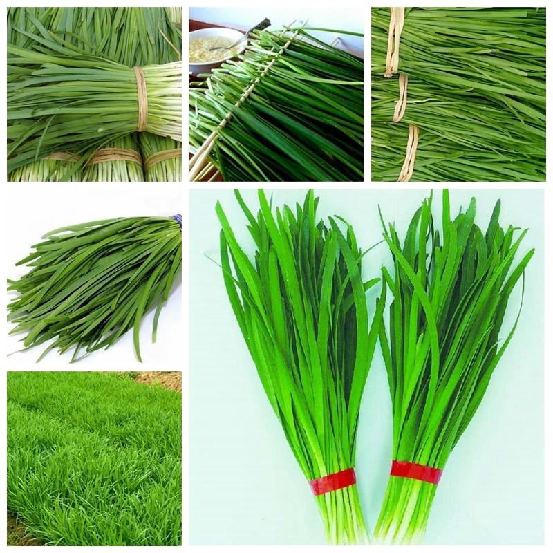 Promotion ! 100 Pcs Potted Leek Plant Rare Garlic China Green Onion Sterilization Vegetable Planta Bonsai Home Garden Plant Pot