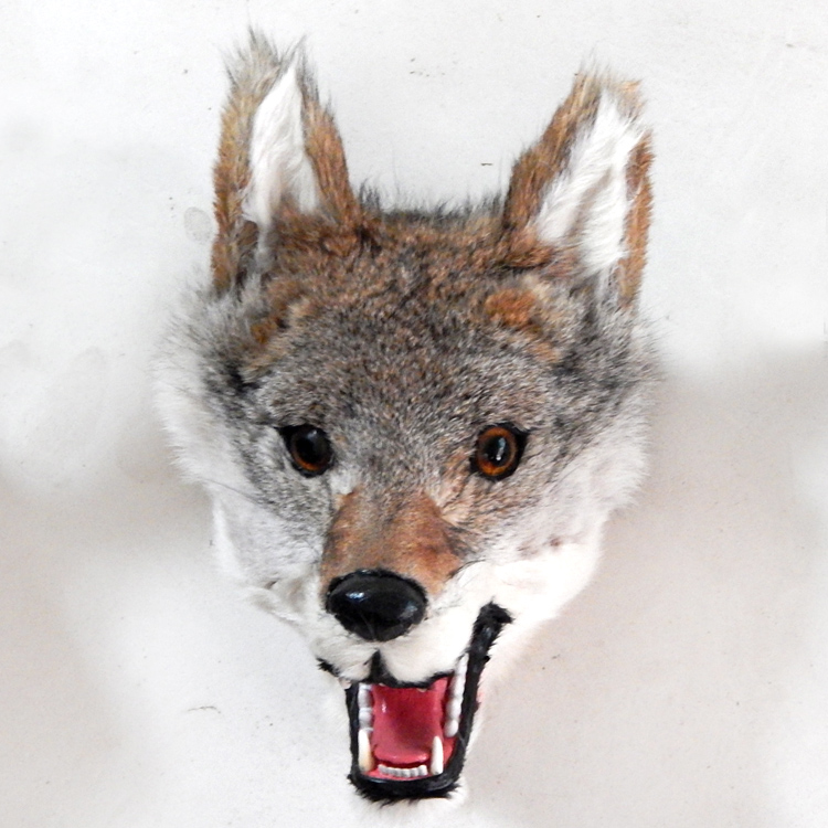 simulation wolf head about 23x22cm gray wolf head toy fur hard model handicraft decoration gift h1241