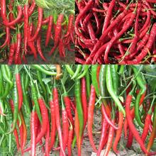 New Arrival 100seeds Giant Spices Spicy Red Chili Hot Pepper Seeds Plants