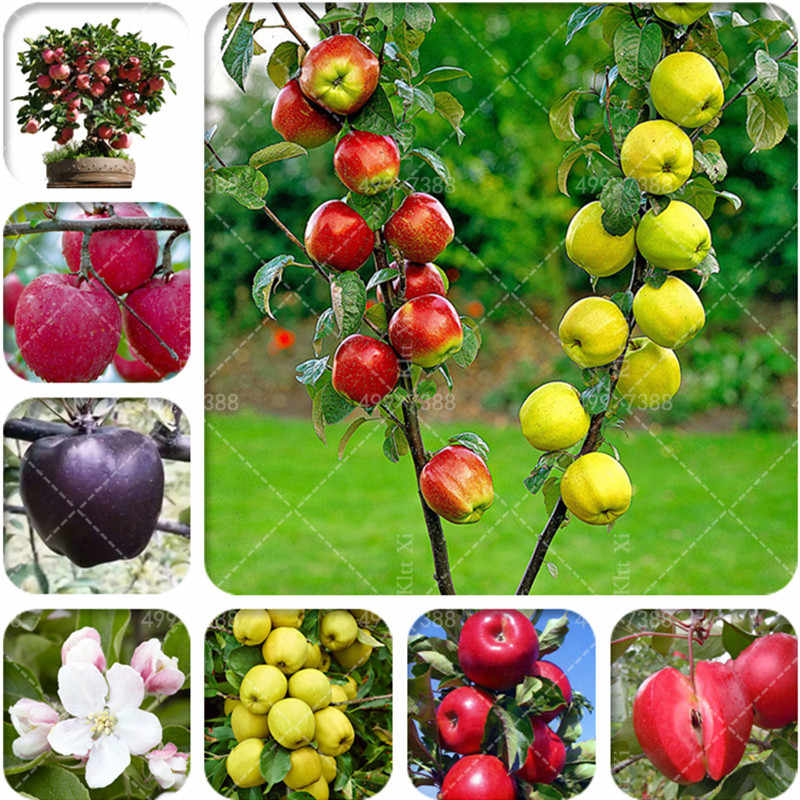 New! 30 Pcs Mix Apple Tree Tropical Fruit Tree Bonsai, Planting is Simple, Novel Plants for Home Garden sementes raras de frutas