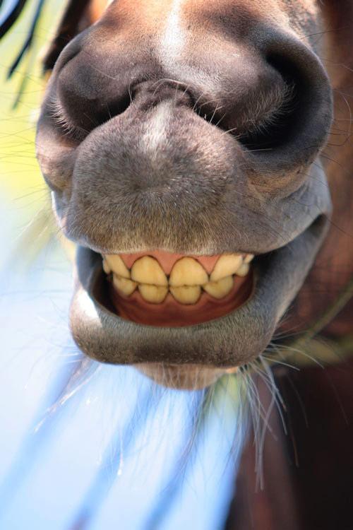 Своими, картинка с улыбкой смешной с зубами