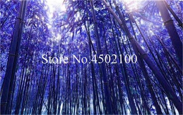 Nuovo Colorato Di Bambù Bonsai 50 pz Bonsai Moso All'aperto Albero Pianta Per La Casa Garden Decor Pianta In Vaso All'ingrosso Della Fabbrica