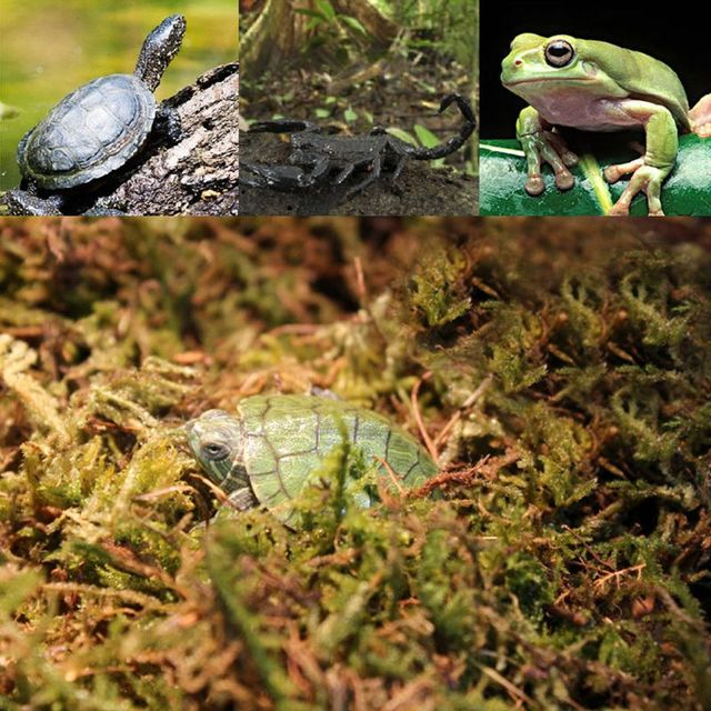 Natural Terrarium Reptile Moss 1