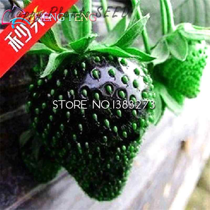 50 pcs Sementes de Morango Leite Super Grandes Morangos Semente Diy Planta Sementes de Flores Pot Perfume Bonsai Para Casa No-gmo Fruta Semillas