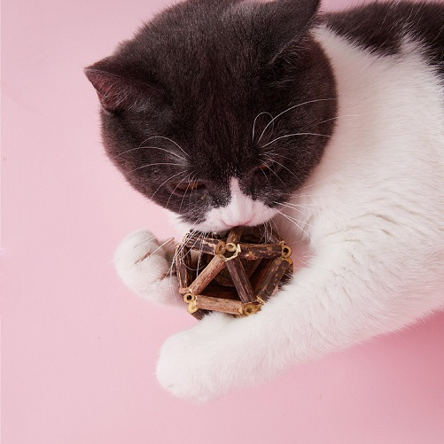 Catnip Teeth Brushing Sticks Cat Toys