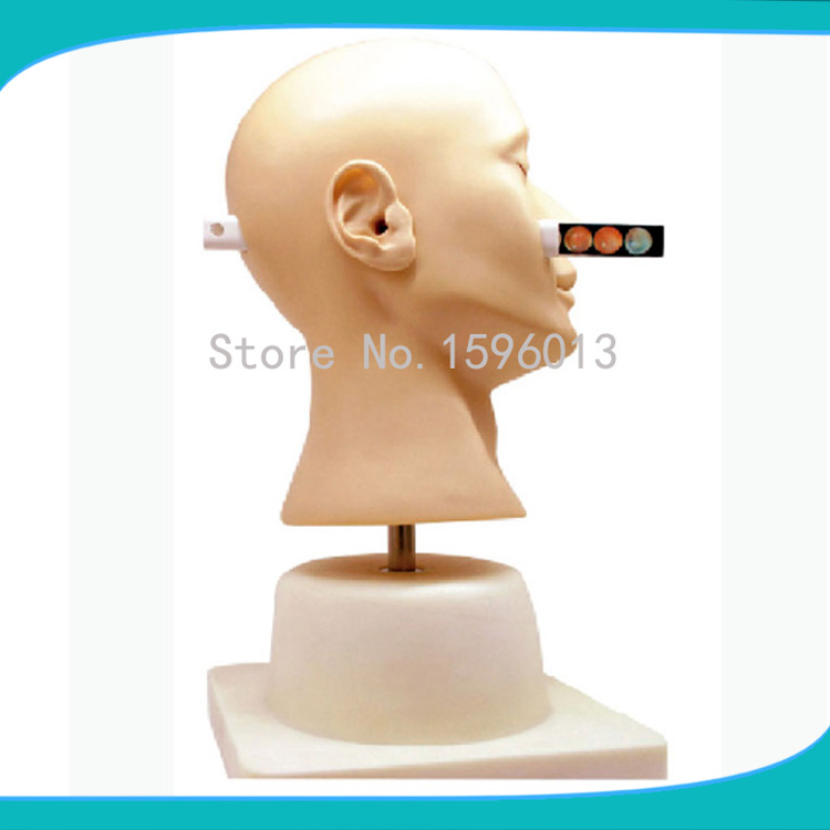 Advanced Ear Diagnostic SimulatorEar diagnosis model