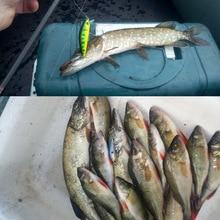 1 шт. рыболовная приманка гольян кренкбейт жесткая приманка плотная воблер медленное погружение Джеркбейт рыболовный снасти