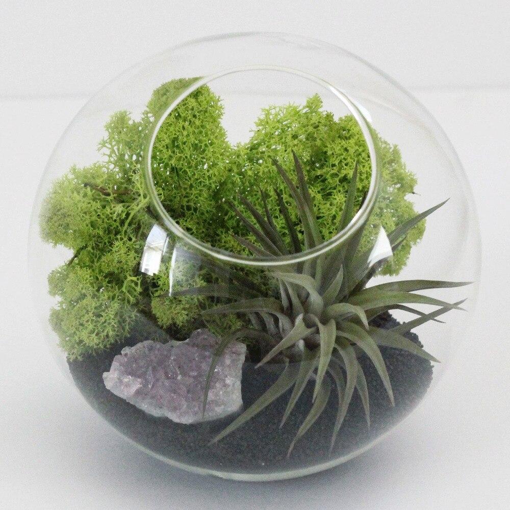 Popular Indoor Plant Nursery Buy Cheap Indoor Plant