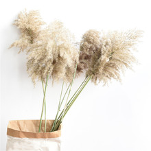 15 Pcs Wedding decoration dried plants raw color Chinese reed pampas grass natural phragmites communis flower bunch